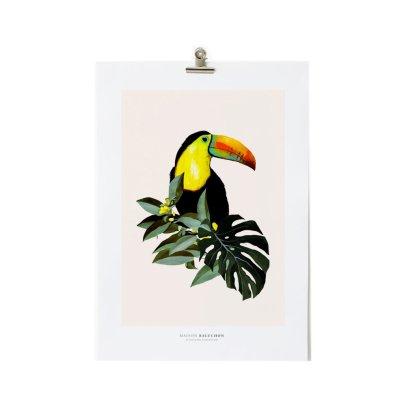 Maison Baluchon Affiche A3 Toucan-listing