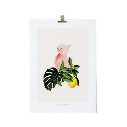 Maison Baluchon Affiche A3 Perroquet-listing