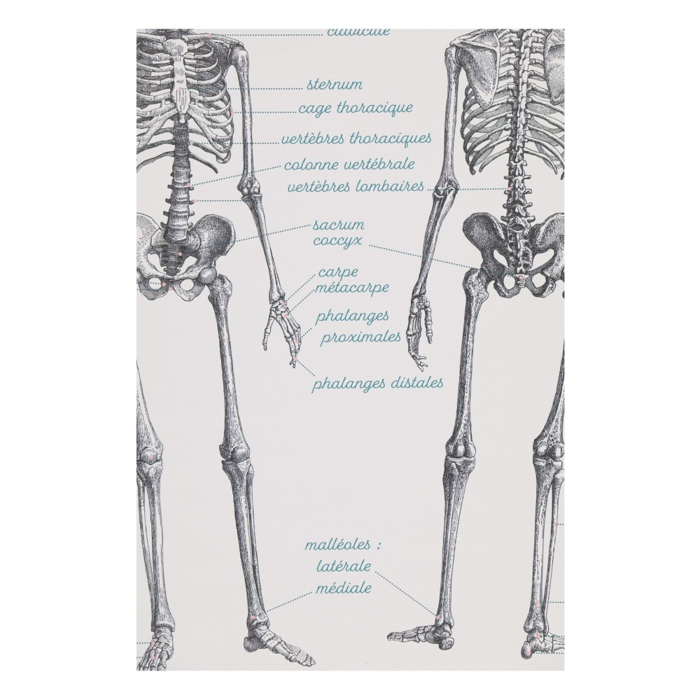 Anatomy Learning Board 70x90cm Multicoloured Les Jolies Planches
